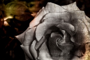 Rose of Sorrows - Abstract Rose