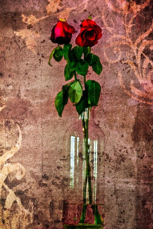 Roses: Tuscan